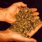 DEHYDRATED FODDER pellets